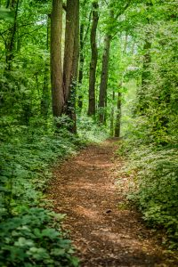 Wake forest counselor trail